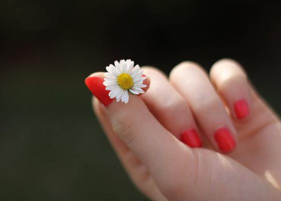 hand-daisy-flower-finger-57465-(1).png
