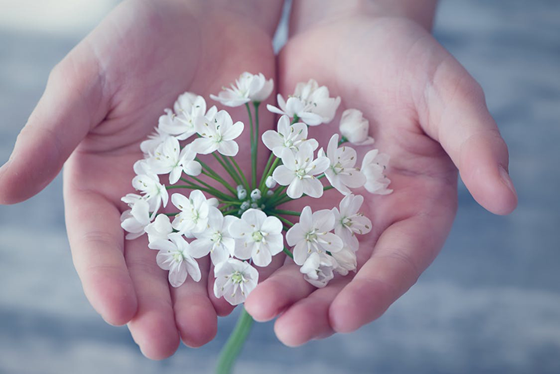 flower-flowers-small-flowers-white-1615612.png